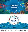 海 海洋 动物 22958635