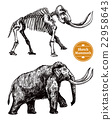 Sketch Hand Drawn Mammoth  22958643