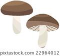 mushroom, mushrooms, shiitake mushroom 22964012
