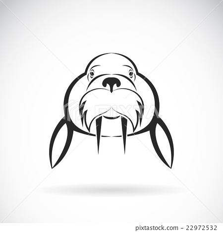 Vector image of Sea lion design  22972532