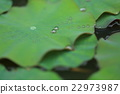 foliage, waterdrop, water-drop 22973987