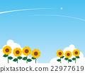 sunflower, sunflowers, bloom 22977619