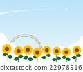 sunflower, sunflowers, bloom 22978516