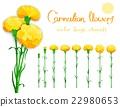 Realistic vector flowers set 22980653