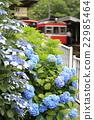 ดอกไม้,ไม้,โรงงาน 22985464