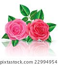 beautiful pink roses. Vector illustration. 22994954