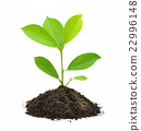 Green Plant and Soil Isolated on white background. 22996148
