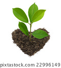 Green Plant and Heart Shape Soil Isolated on white 22996149