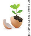 Green Plant with Soil in eggshell Isolated 22996150
