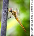 蜻蜓 蟲子 漏洞 22996493