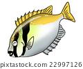 ปลา,ปลาน้ำเค็ม,สัตว์ 22997126