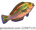 ปลา,ปลาน้ำเค็ม,สัตว์ 22997133
