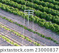 Aerial view of electrical tower and orange trees 23000837
