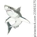 鯊魚 魚 插圖 23003275