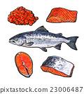 三文魚 鮭魚 魚 23006487