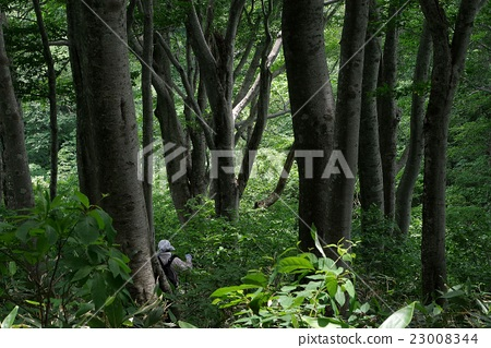 新保岳의 너도밤 나무 숲 23008344