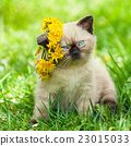 kitten, flower, grass 23015033