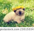 kitten, flower, grass 23015034