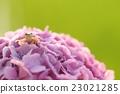 兩棲的 一隻兩棲動物 青蛙 23021285
