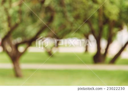 Garden alley bokeh background, lens blur 23022230