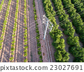 Aerial view of electrical tower and orange trees 23027691