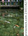 池塘 鹹水湖 魚 23031627