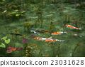 池塘 鹹水湖 魚 23031628
