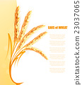 Yellow background with ears of wheat. Vector. 23037065