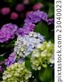 พืชไม้ดอกขนาดใหญ่ 23040023