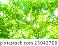 翠绿 鲜绿 树叶 23042709