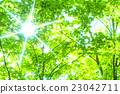 翠綠 鮮綠 樹葉 23042711