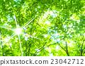翠綠 鮮綠 樹葉 23042712