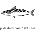 mackerel, fish, fishes 23047144