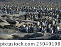 帝王企鹅 包装 剥撕式面膜 23049198