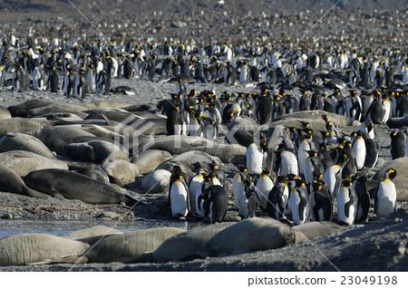 帝王企鹅 小组 团队 23049198