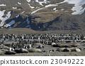 帝王企鹅 小组 团队 23049222