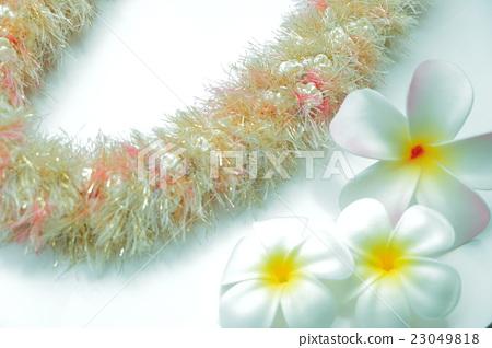 Hawaiian Ribbon Ray 23049818