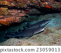 鯊魚 海裡 海底的 23059013