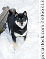 Shiba Inu和雪 23066313