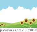 sunflower, sunflowers, summer 23079819