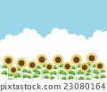 sunflower, sunflowers, field 23080164