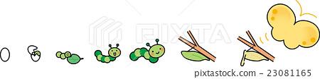 昆虫出现 长出翅膀飞起来 蝴蝶 23081165