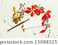 Dry leaves with blank letter and paint brush 23088325