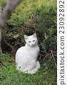 動物 貓 白貓 23092892