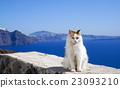 White cat blue water and Santorini mountains 23093210
