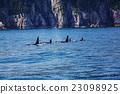 killer, whale, marine 23098925
