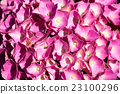Close up of Pink Hydrangea Flowers 23100296