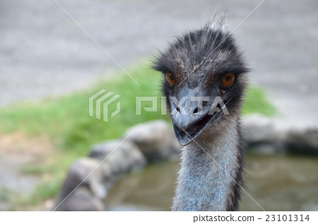Emu 23101314