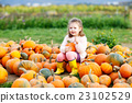 Little kid girl with lot of pumpkins on field 23102529