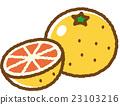 grapefruit, grapefruits, fruit 23103216
